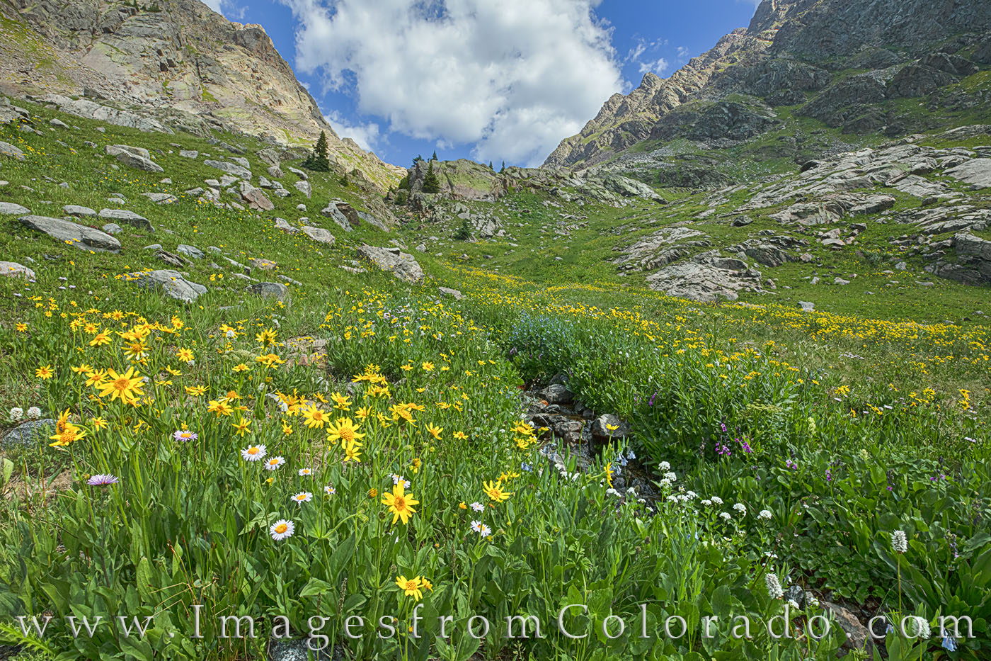 Wildflowers in Summit County