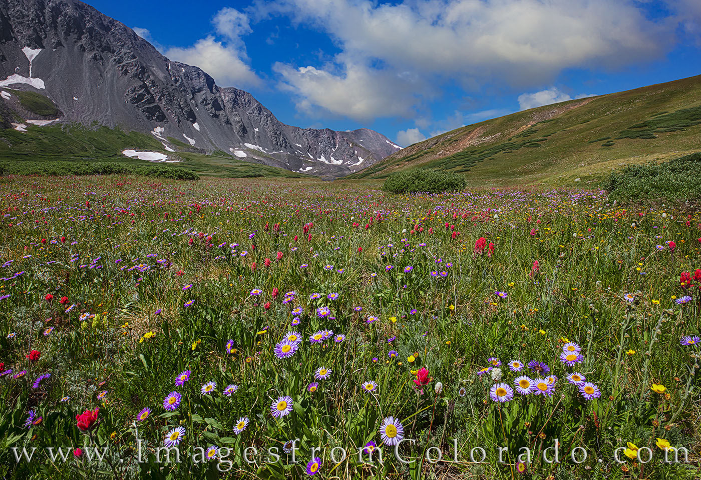 Wildflowers along the way to Grays and Torreys Peak