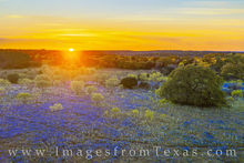 bluebonnets, aerial, drone, hill country, sunset, evening, dirt road, rural, peace, poppies