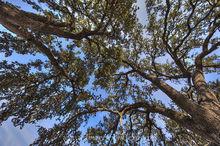 Beneath the Texas Summer Trees 1