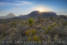 big bend, chisos mountains, sunrise, western slope, yucca, cacti, national park, texas parks, scenic drive, texas sunrise, chihuahuan desert, desert, west texas