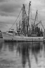 shrimp boats, seagulls, port isabel, panorama, spring, texas coast, shrimp, boats, harbor, dock, south padre