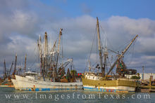 shrimp boats, texas coast, port isabel, south padre, afternoon, seagull, birds, gulf of mexico, fishing
