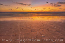 south padre island, sand, shells, sunrise, morning, gulls, seagulls, surf, texas coast, gulf of mexico, orange
