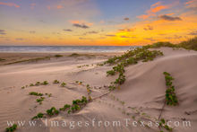south padre island, texas coast, sunrise, dunes, sand dunes, ivy, grass, gulf coast, port isabel, sand, morning