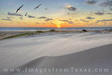 south padre island, sunrise, seagulls, sand dunes, south texas, port isable, beach, sand, sun, morning, texas coast, gulf of mexico