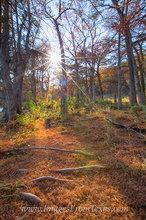 The Red Carpet at Pedernales Falls State