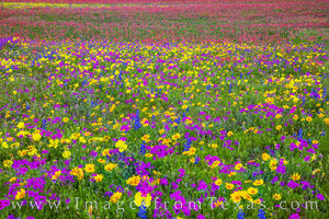 A Painter's Dream of Wildflowers 1