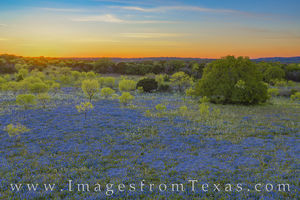 Aerial Bluebonnet Sunset in the Hill Country 413-1