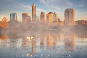 Bird in Flight - Austin Texas Skyline