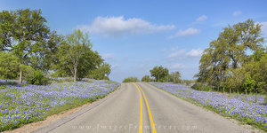 Bluebonnet Highway Panorama