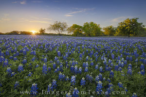 Bluebonnet Sunset in the Hill Country 1