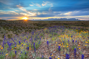 Bluebonnet Sunset over the Chisos 1