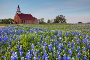 Bluebonnets and an Old Country Church