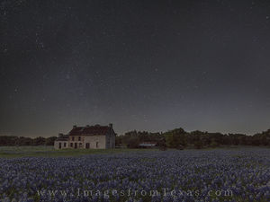Bluebonnets under Starry Skies 1