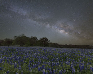 Bluebonnets under the Milky Way 2