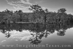 Caddo Lake Evening Black and White 7