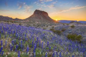 Cerro Castellan and Bluebonnets at Sunset 21