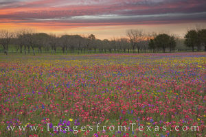 Church Road Wildflowers 414-2