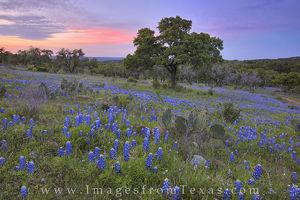 Colors of a Bluebonnet Sunset 2