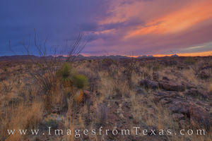 Colors of the Desert - Big Bend Ranch 427 1