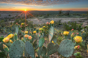 Enchanted Rock Prickly Pear Evening 1