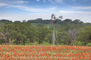 Indian Blankets and a Windmill