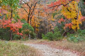 Lost Maples - November Stroll 2