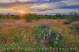 May Reds at Sunset 501-1