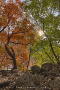 McKittrick Canyon Autumn 2