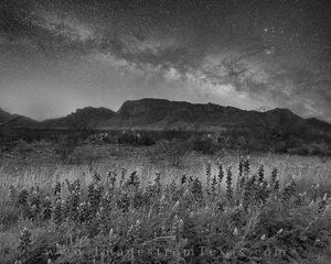 Milky Way Bluebonnets in Black and White at Big Bend 1