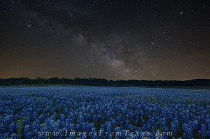 Milky Way over Texas Bluebonnets