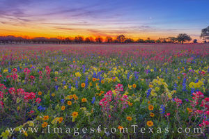 Moonrise over Wildflowers 402-1