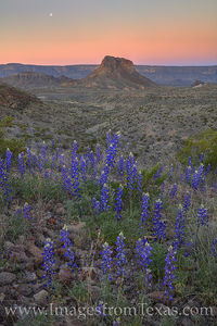 Moonset over Bluebonnets in Big Bend 2
