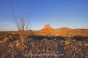 Octollio Moonrise in Big Bend 1