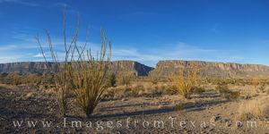 Ocotillo near Santa Elena Canyon Pano 1
