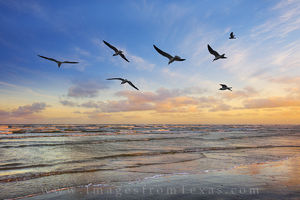 Port Aransas Seagull Sunset 1
