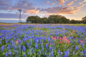Poteet Wildflowers at Sunrise 319-2
