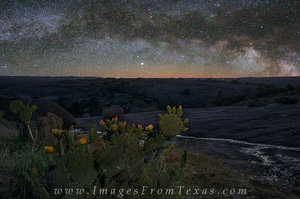 Prickly Pear Under the Milky Way