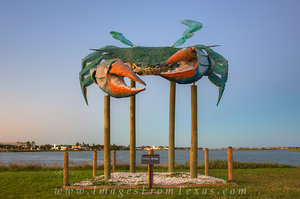 Greetings from the Blue Crab