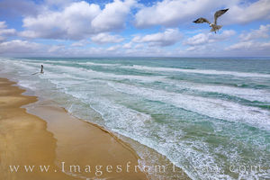 South Padre Island Seagulls Aerial 509-1