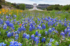 Texas Bluebonnets and the 360 Bridge