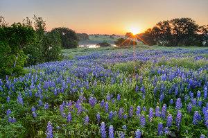 Country Road Bluebonnet Sunrise 1