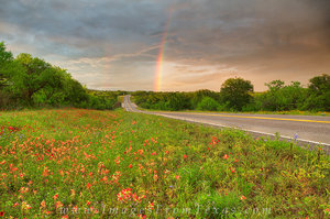 Hill Country Wildflowers and a Rainbow 2