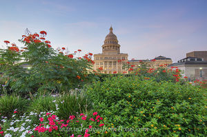 Texas State Capitol September Flowers 5