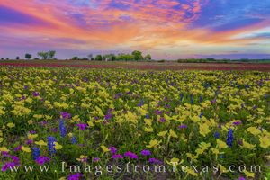 Texas Wildflower Sunset 328-2