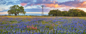 South Texas Wildflower Sunrise Panorama 319-1