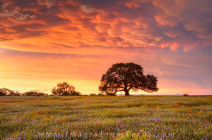 My Favorites Texas Images