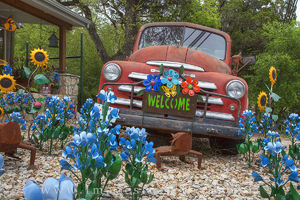 Wimberley Bluebonnets and an Old Dodge Truck 2