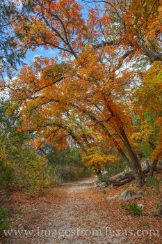lost maples, red maples, fall colors, autumn colors, east-west trail, hiking, texas state parks, lost maples prints, november